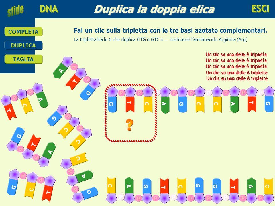 educare alla scienza e alla tecnologia COMPLETA DUPLICA TAGLIA DUPLICA Duplica la doppia elica La doppia elica si divide … COMPLETA TAGLIA Inizia a du