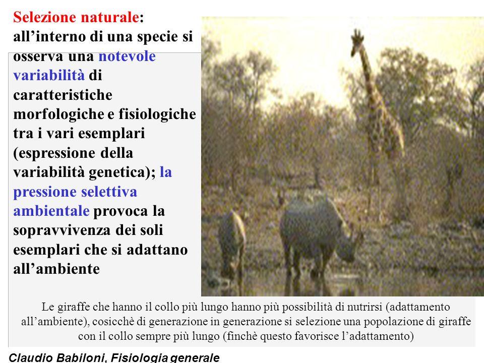 Claudio Babiloni, Fisiologia generale Conduzione del potenziale dazione n Propagazione del potenziale dazione.