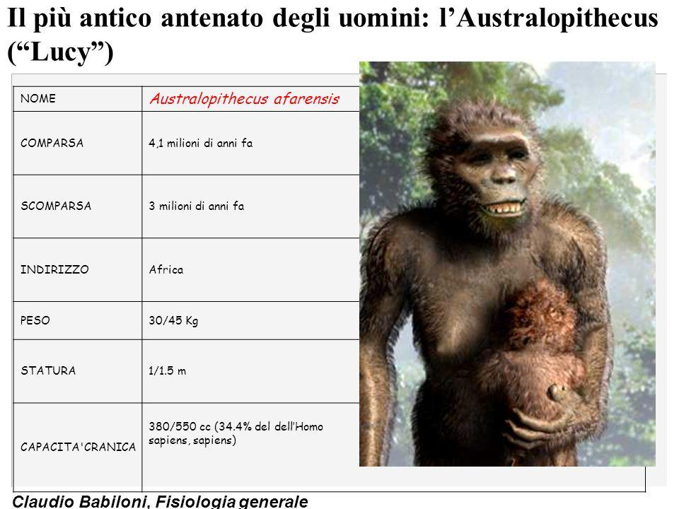 Claudio Babiloni, Fisiologia generale Transizione ominide-uomo(Homo abilis): un gene ferma la produzione di acido N-glycolylneuramine, il cervello è accresciuto, appaiono i primi strumenti (battere, schiacciare, scavare) NOME Homo habilis COMPARSA2.5 milioni di anni fa SCOMPARSA1.6 milioni di anni fa INDIRIZZO Africa (Great Rift Valley system dellAfrica est) PESO40 Kg STATURA1.4 m CAPACITA CRANICA 640 cc (47.4% del dellHomo sapiens, sapiens)