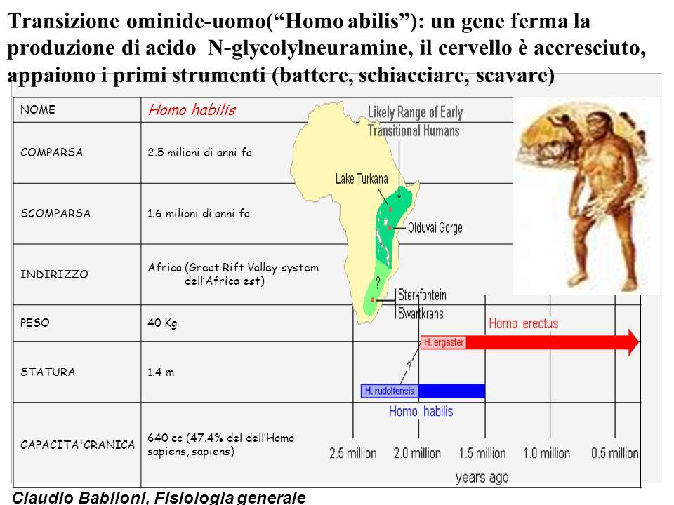 Claudio Babiloni, Fisiologia generale Homo erectus ( ergaster,erectus): cervello e corpo sono accresciuti, si crea una cultura tecnologica (armi, fuoco) e si spinge oltre lAfrica NOME Homo erectus COMPARSA1,8 milioni di anni fa SCOMPARSA500.000 mila anni fa INDIRIZZOAfrica, Europa, Asia PESO60/70 Kg STATURA1.6/1.8 m CAPACITA CRANICA1000 cc (74% dellHomo sapiens, sapiens)