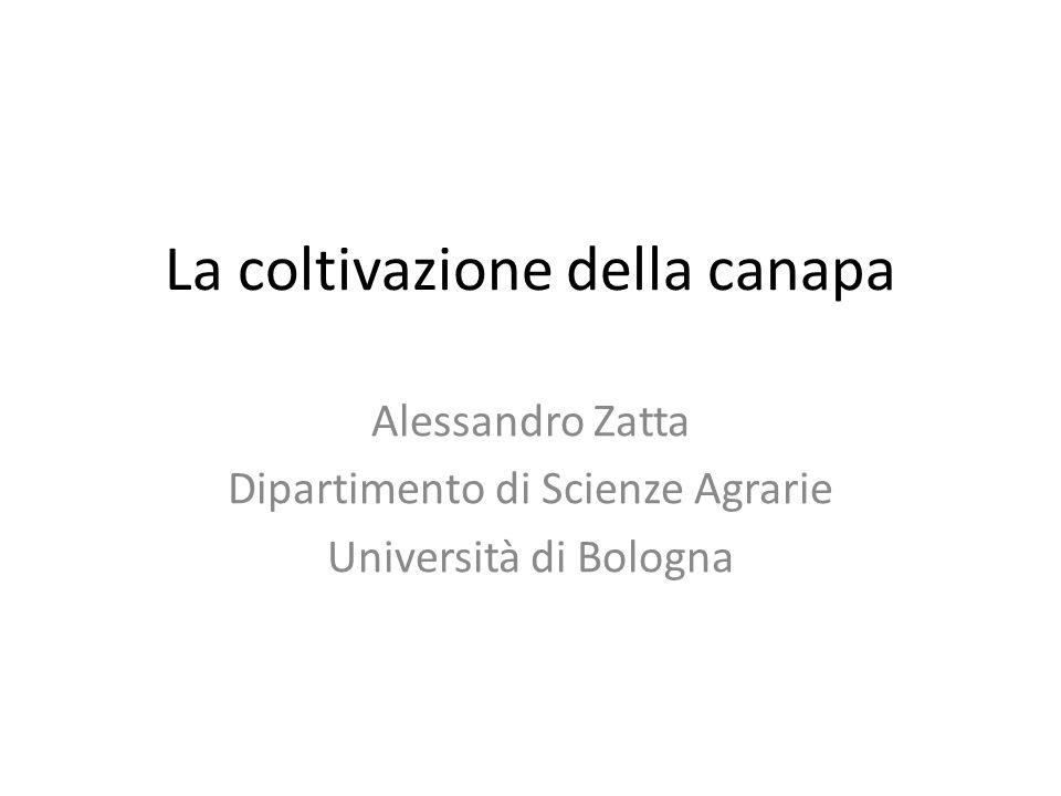 La coltivazione della canapa Alessandro Zatta Dipartimento di Scienze Agrarie Università di Bologna