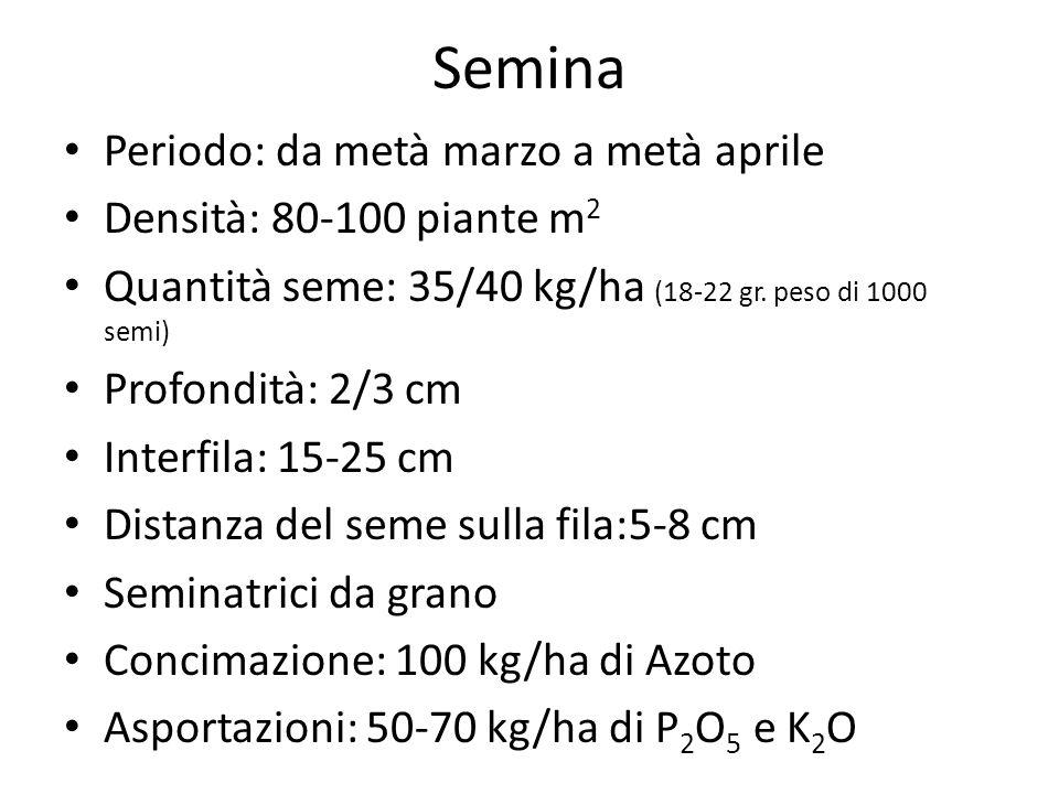 Semina Periodo: da metà marzo a metà aprile Densità: 80-100 piante m 2 Quantità seme: 35/40 kg/ha (18-22 gr. peso di 1000 semi) Profondità: 2/3 cm Int