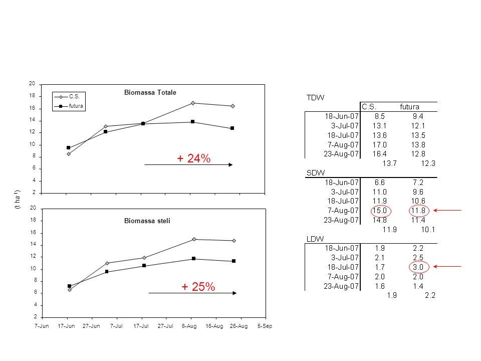 Biomassa Totale 2 4 6 8 10 12 14 16 18 20 C.S. futura Biomassa steli 2 4 6 8 10 12 14 16 18 20 7-Jun17-Jun27-Jun7-Jul17-Jul27-Jul6-Aug16-Aug26-Aug5-Se