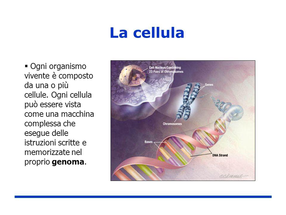 La cellula Ogni organismo vivente è composto da una o più cellule. Ogni cellula può essere vista come una macchina complessa che esegue delle istruzio