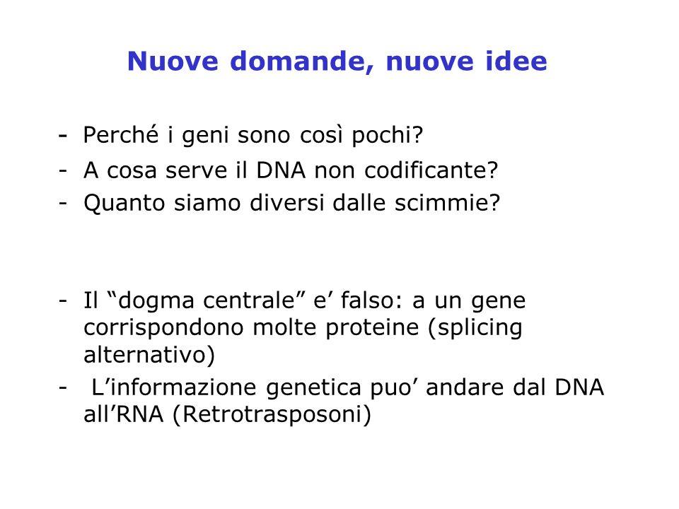 Nuove domande, nuove idee - Perché i geni sono così pochi? -A cosa serve il DNA non codificante? -Quanto siamo diversi dalle scimmie? -Il dogma centra