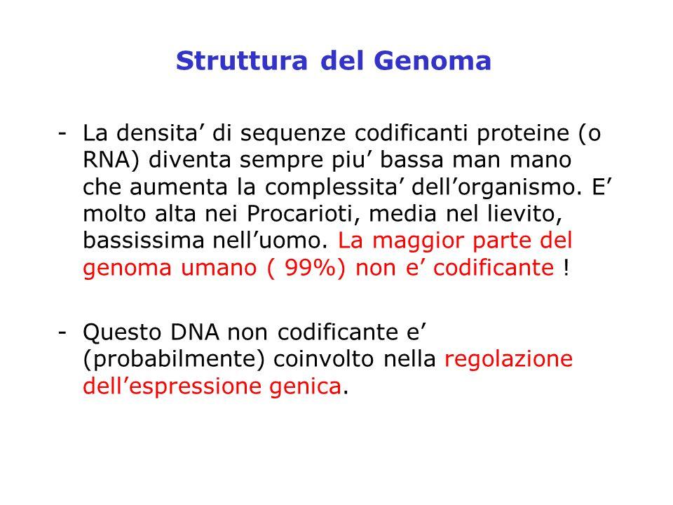 Struttura del Genoma -La densita di sequenze codificanti proteine (o RNA) diventa sempre piu bassa man mano che aumenta la complessita dellorganismo.
