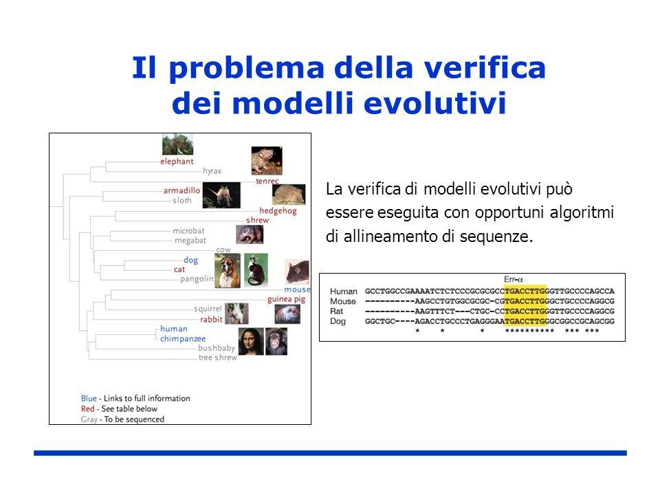 La verifica di modelli evolutivi può essere eseguita con opportuni algoritmi di allineamento di sequenze.