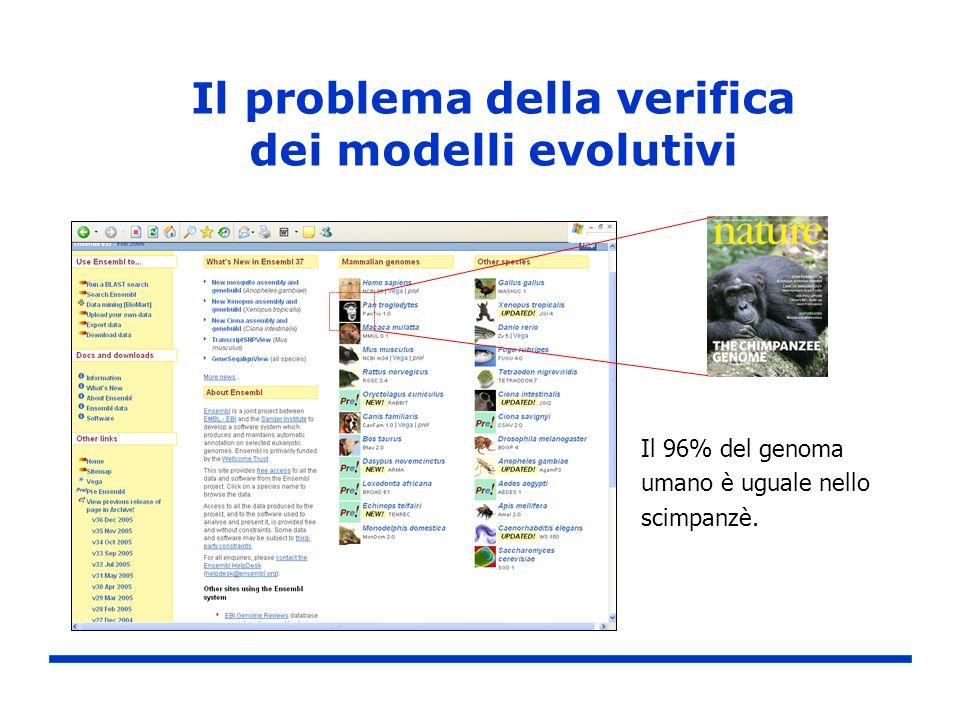 Il problema della verifica dei modelli evolutivi Il 96% del genoma umano è uguale nello scimpanzè.
