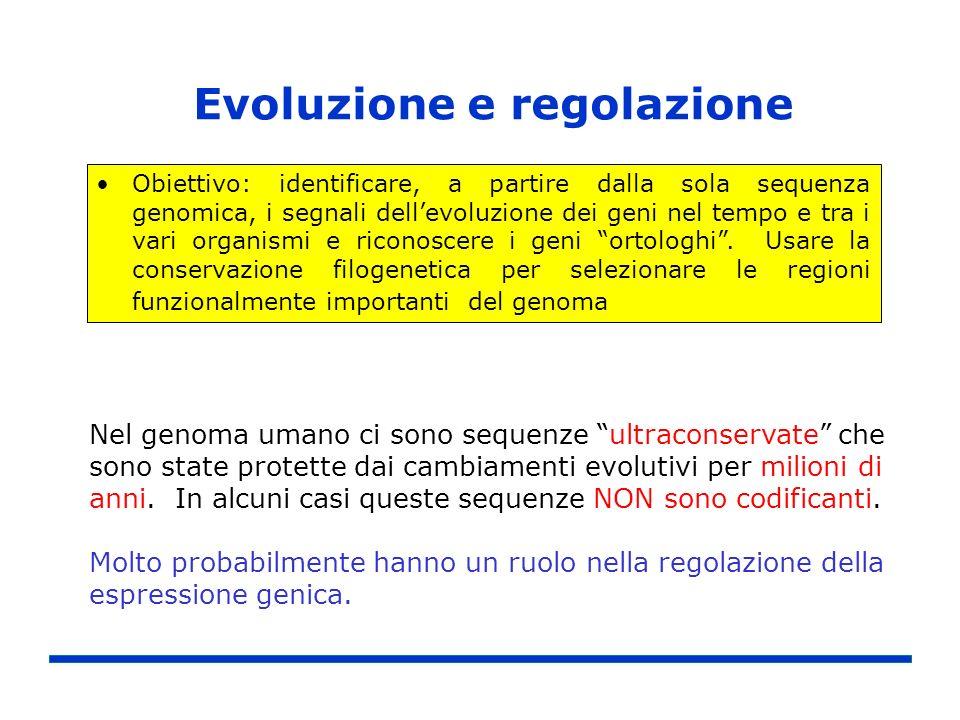 Evoluzione e regolazione Obiettivo: identificare, a partire dalla sola sequenza genomica, i segnali dellevoluzione dei geni nel tempo e tra i vari org