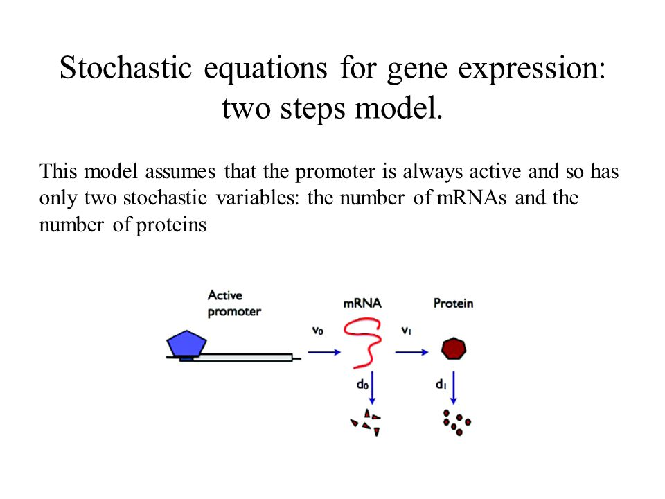 Stochastic equations for gene expression: two steps model. This model assumes that the promoter is always active and so has only two stochastic variab