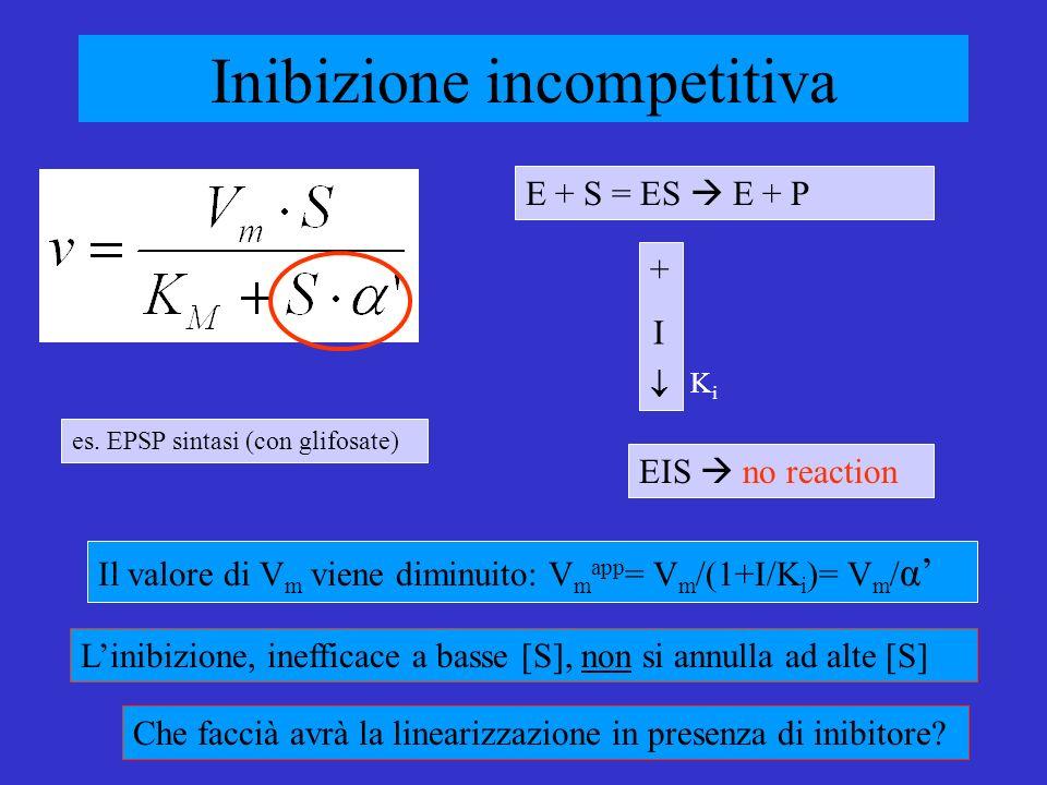 Inibizione incompetitiva Il valore di V m viene diminuito: V m app = V m /(1+I/K i )= V m / α Linibizione, inefficace a basse [S], non si annulla ad alte [S] E + S = ES E + P EIS no reaction + I Che faccià avrà la linearizzazione in presenza di inibitore.
