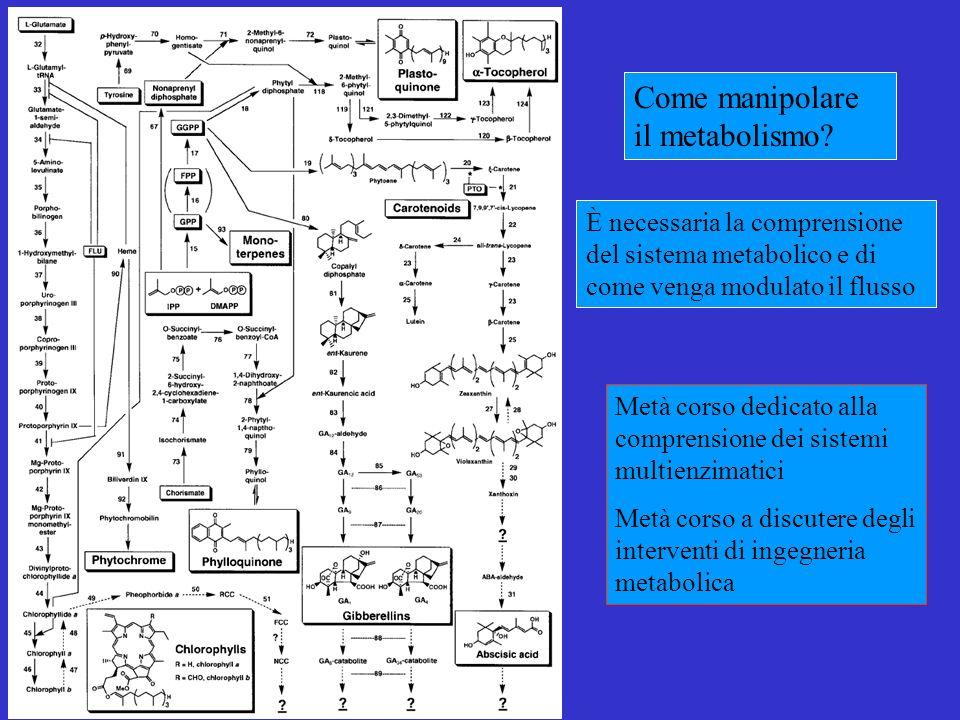 Come manipolare il metabolismo.