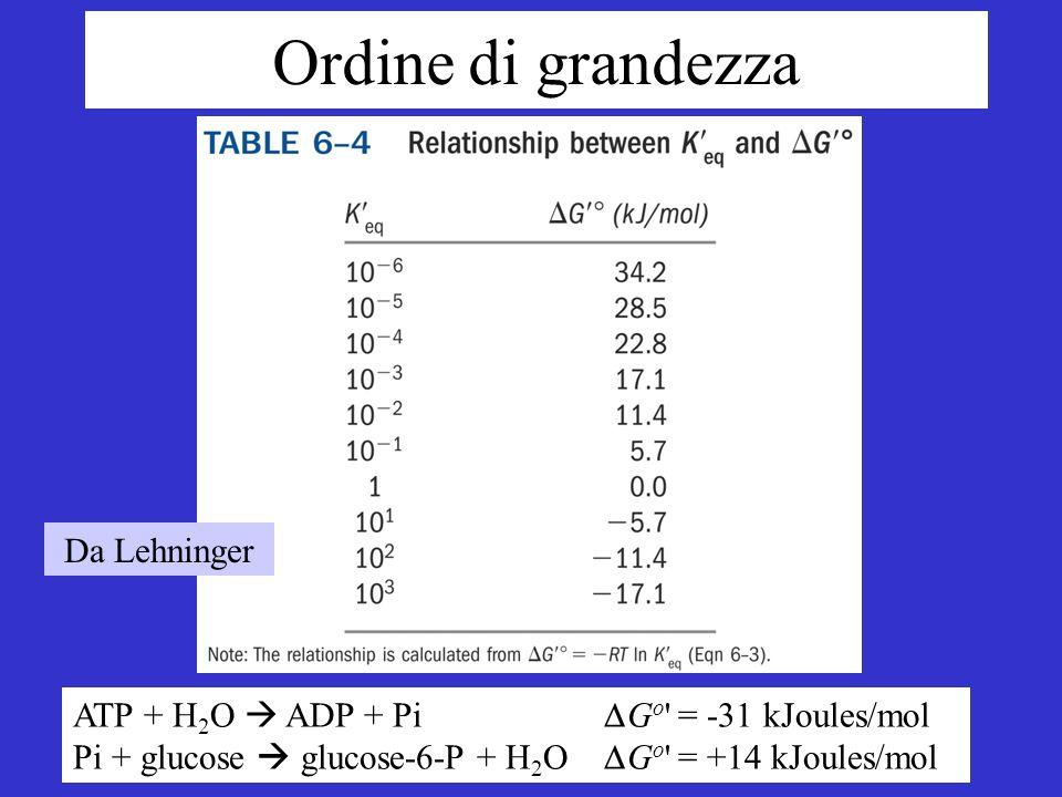 Da Lehninger Ordine di grandezza ATP + H 2 O ADP + Pi G o = -31 kJoules/mol Pi + glucose glucose-6-P + H 2 O G o = +14 kJoules/mol