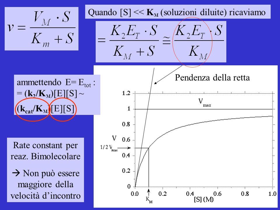 Quando [S] << K M (soluzioni diluite) ricaviamo ammettendo E= E tot : = (k 2 /K M )[E][S] ~ (k cat /K M )[E][S] Pendenza della retta Rate constant per reaz.