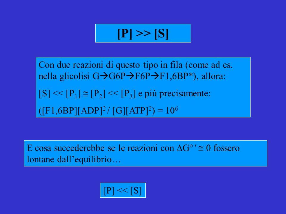 E cosa succederebbe se le reazioni con G° 0 fossero lontane dallequilibrio… [P] >> [S] Con due reazioni di questo tipo in fila (come ad es.