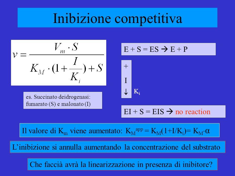 Inibizione competitiva Il valore di K m viene aumentato: K M app = K M (1+I/K i )= K M α Linibizione si annulla aumentando la concentrazione del substrato E + S = ES E + P EI + S = EIS no reaction + I es.