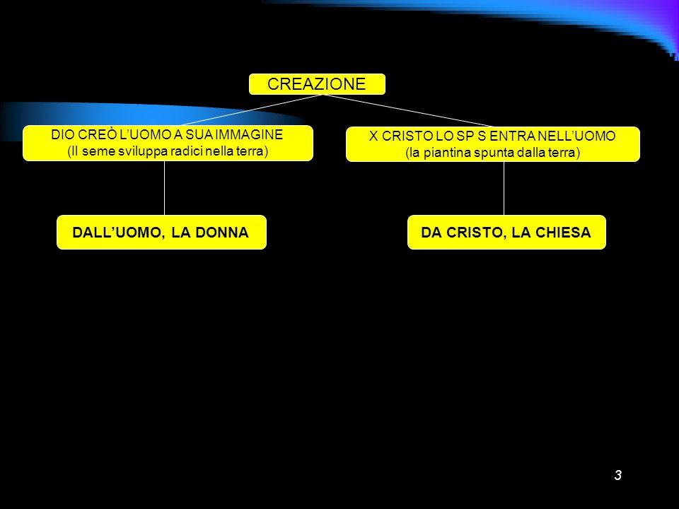 3 CREAZIONE DIO CREÒ LUOMO A SUA IMMAGINE (Il seme sviluppa radici nella terra) X CRISTO LO SP S ENTRA NELLUOMO (la piantina spunta dalla terra) DALLU