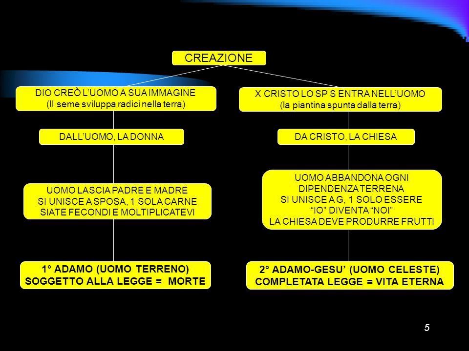 5 CREAZIONE DIO CREÒ LUOMO A SUA IMMAGINE (Il seme sviluppa radici nella terra) X CRISTO LO SP S ENTRA NELLUOMO (la piantina spunta dalla terra) DALLU