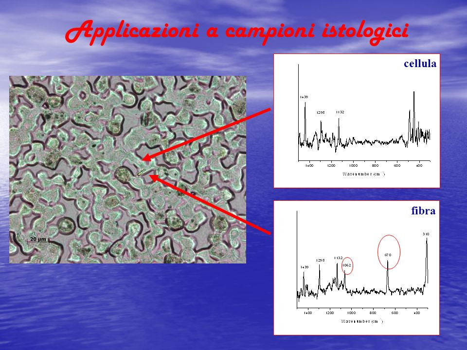 Applicazioni a campioni istologici fibra cellula