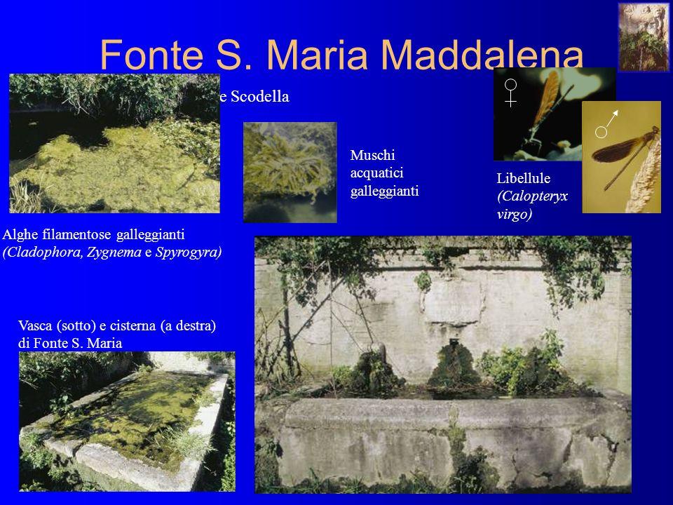 Fonte S.Maria Maddalena C.da Fonte Scodella Vasca (sotto) e cisterna (a destra) di Fonte S.