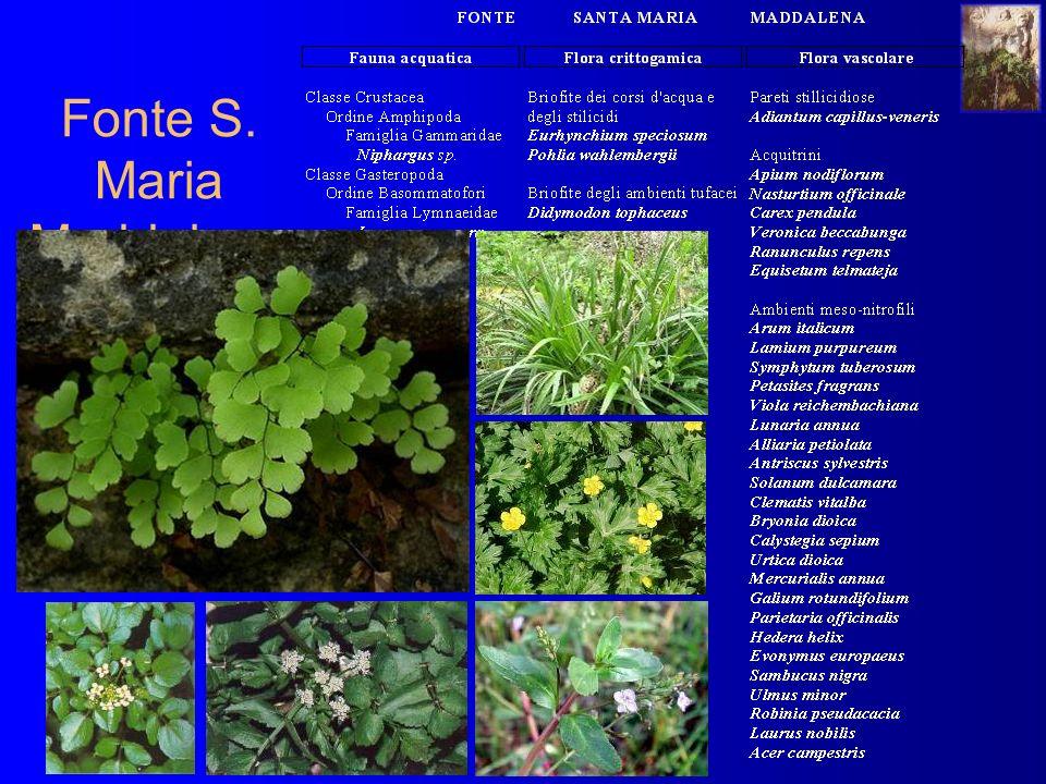Fonte S. Maria Maddalena