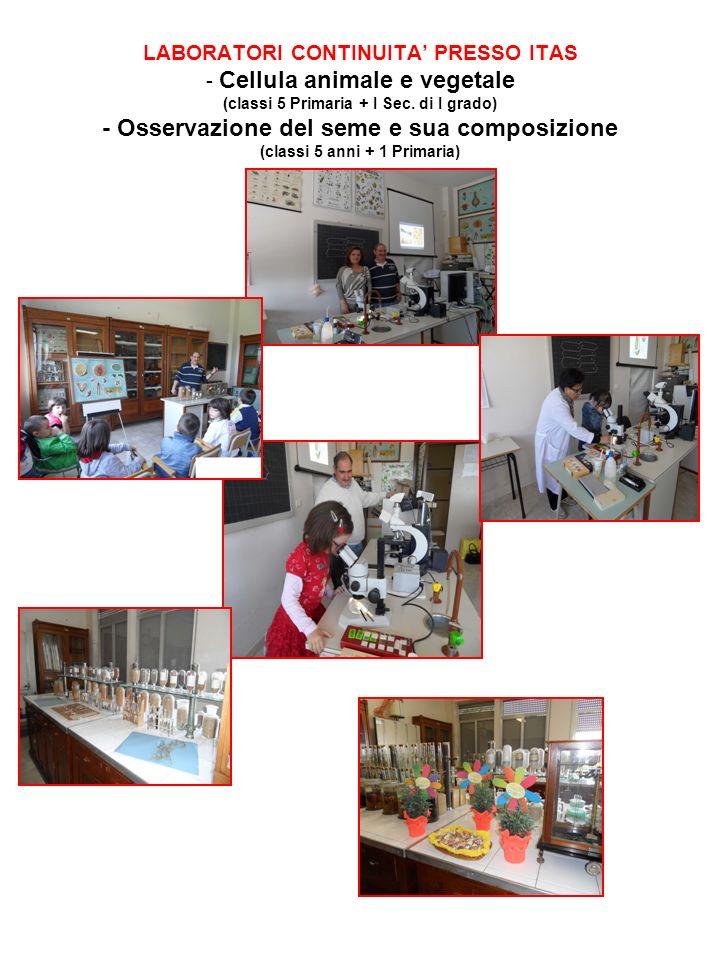 LABORATORI CONTINUITA PRESSO ITAS - Cellula animale e vegetale (classi 5 Primaria + I Sec. di I grado) - Osservazione del seme e sua composizione (cla