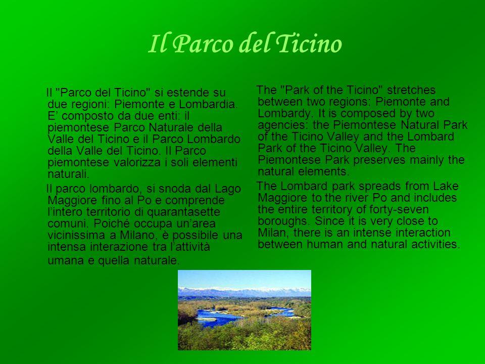 Il Parco del Ticino Il Parco del Ticino si estende su due regioni: Piemonte e Lombardia.