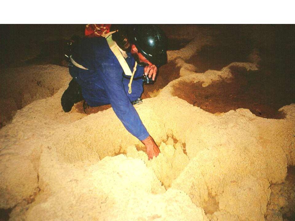 Concrezioni a paletas Un esempio di concrezione secondaria di forma discoidale (paleta), riscontrabile nella Caverna, è segnalato anche in Virginia e Nevada (USA) dove sono state chiamate shields o palette (da McGill 1933, Kundert 1952 e Nuñez Jiménez 1990).