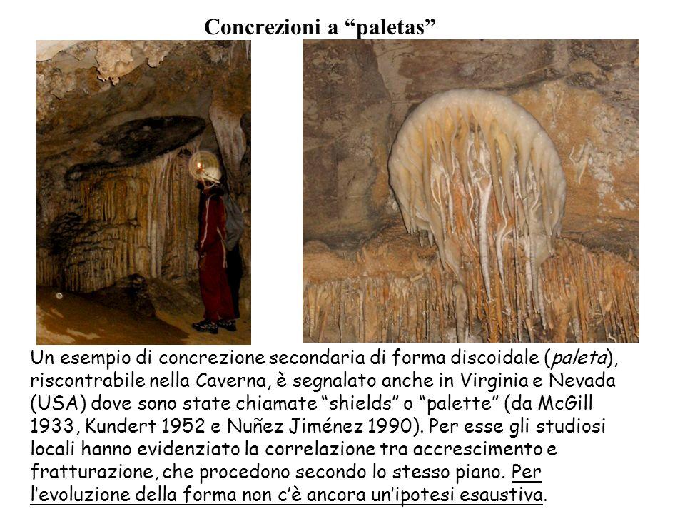Concrezioni a paletas Un esempio di concrezione secondaria di forma discoidale (paleta), riscontrabile nella Caverna, è segnalato anche in Virginia e