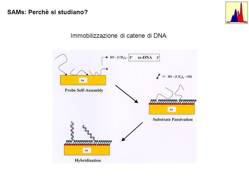 SAMs: Perchè si studiano? Immobilizzazione di catene di DNA