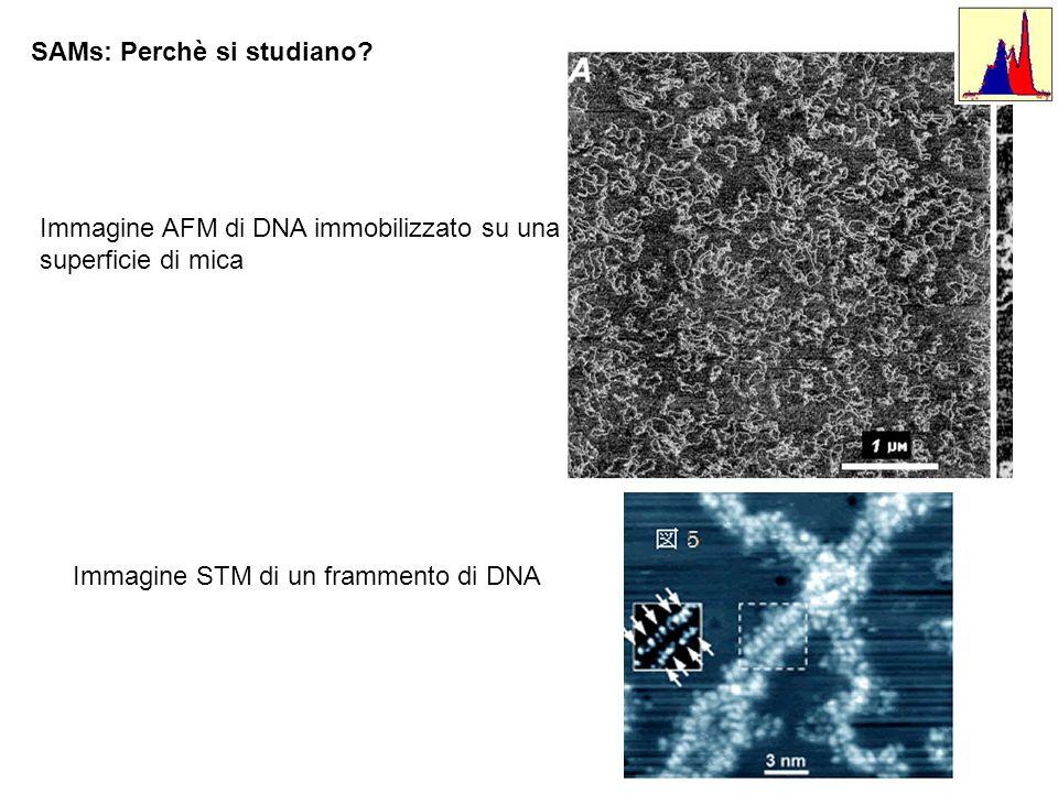 SAMs: Perchè si studiano? Immagine AFM di DNA immobilizzato su una superficie di mica Immagine STM di un frammento di DNA