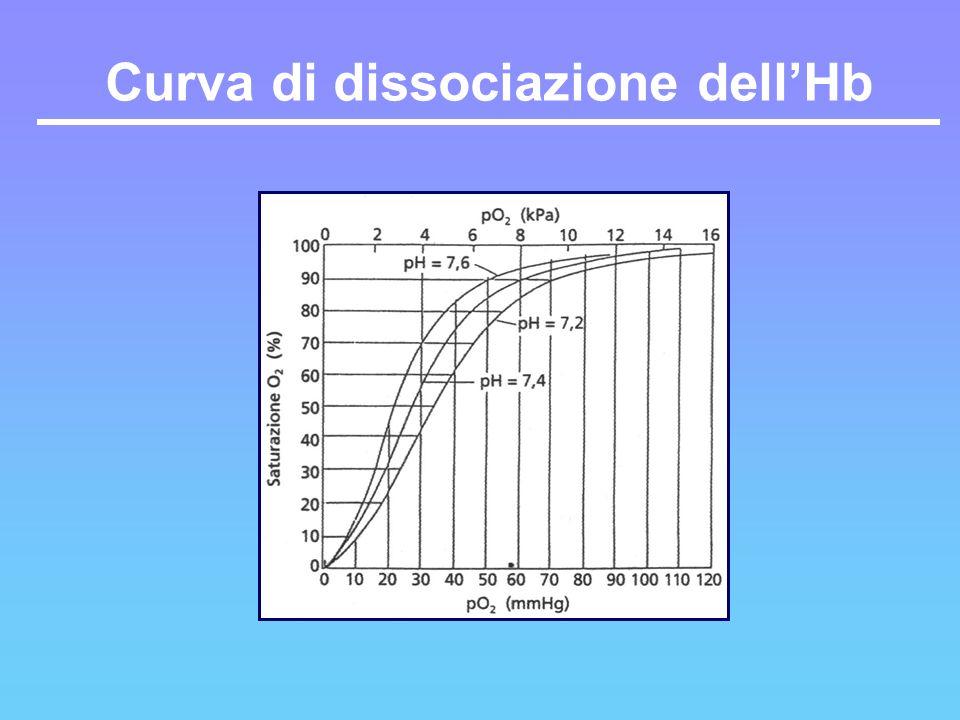 Curva di dissociazione dellHb