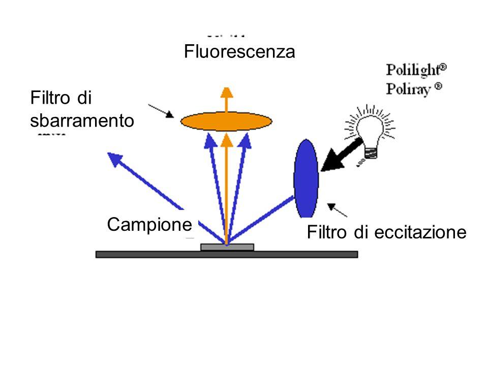Filtro di sbarramento Fluorescenza Filtro di eccitazione Campione