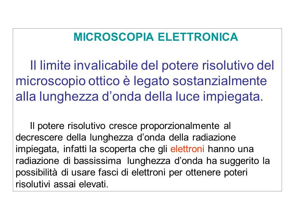 MICROSCOPIA ELETTRONICA Il limite invalicabile del potere risolutivo del microscopio ottico è legato sostanzialmente alla lunghezza donda della luce i