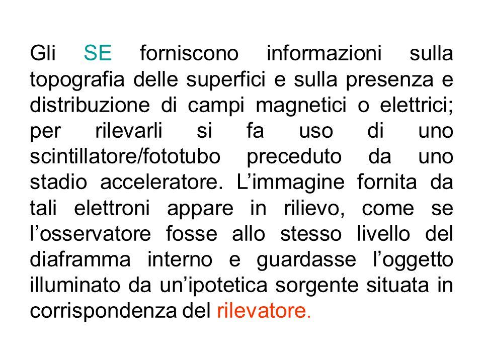 Gli SE forniscono informazioni sulla topografia delle superfici e sulla presenza e distribuzione di campi magnetici o elettrici; per rilevarli si fa u