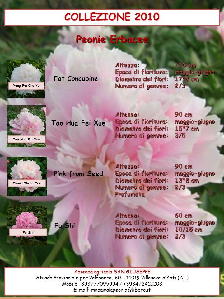 COLLEZIONE 2010 Azienda agricola SAN GIUSEPPE Strada Provinciale per Valfenera, 60 - 14019 Villanova dAsti (AT) Mobile +393777095994 / +393472412203 E