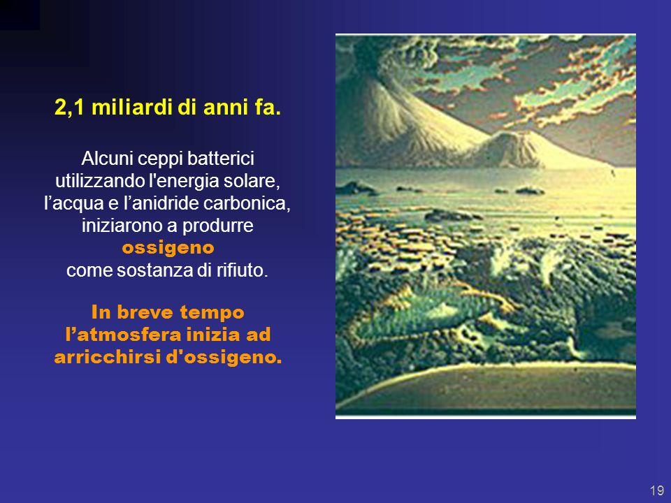 18 Vita 3.7 miliardi anni fa 3,7 miliardi di anni fa Nei mari iniziarono a formarsi macromolecole organiche che costituirono strutture con attività biologica.