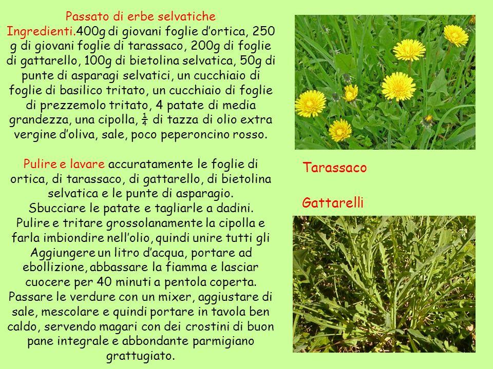 Passato di erbe selvatiche Ingredienti.400g di giovani foglie dortica, 250 g di giovani foglie di tarassaco, 200g di foglie di gattarello, 100g di bie