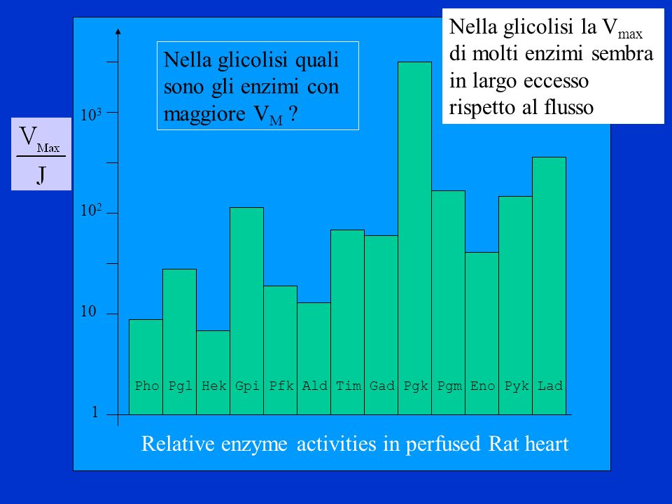 1 10 2 10 Relative enzyme activities in perfused Rat heart 10 3 Pho Pgl Hek Gpi Pfk Ald Tim Gad Pgk Pgm Eno Pyk Lad Nella glicolisi quali sono gli enz