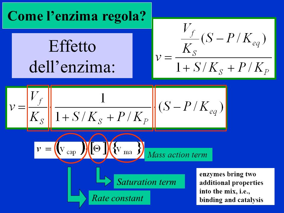 Effetto dellenzima: Rate constant Mass action term Saturation term Come lenzima regola? enzymes bring two additional properties into the mix, i.e., bi