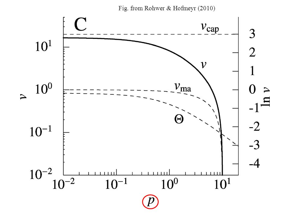 The uni-uni reaction equation can be recast in a slightly different form: where (v cap )= k 2 E t /K s This term was inglobated with V f in the previous formulation, but was moved here Decomposition according to Rohwer & Hofmeyr (Stellenbosch) Decomposition according to P.
