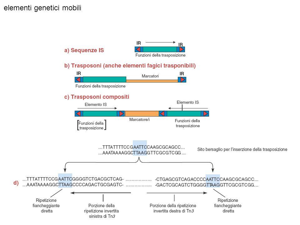 elementi genetici mobili