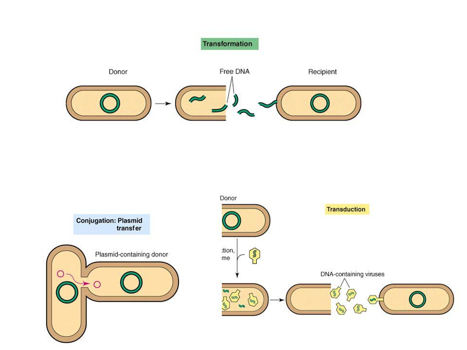 trasformazione con DNA cromosomale (Gram-negativi, es.