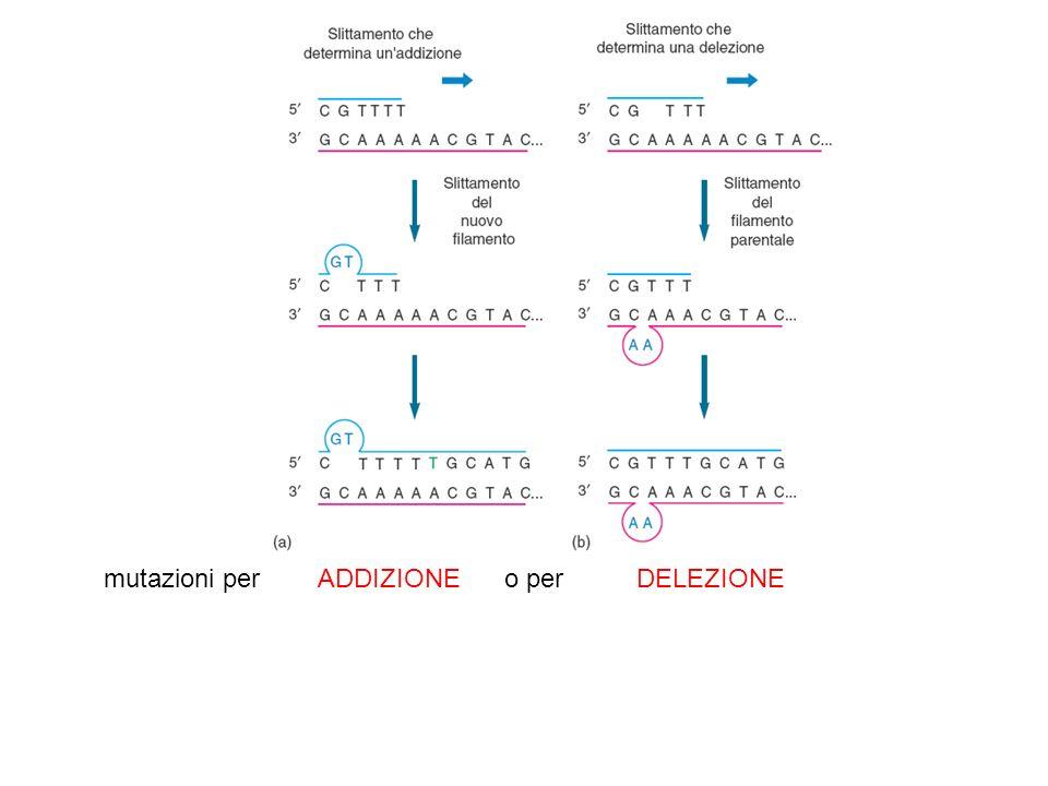 mutazioni per ADDIZIONE o per DELEZIONE