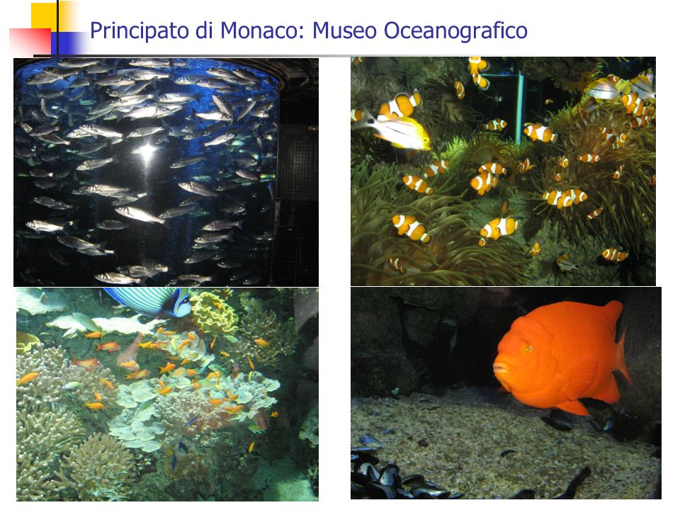 Principato di Monaco: Museo Oceanografico