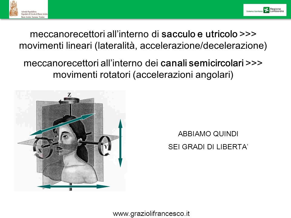 meccanorecettori allinterno di sacculo e utricolo >>> movimenti lineari (lateralità, accelerazione/decelerazione) meccanorecettori allinterno dei cana