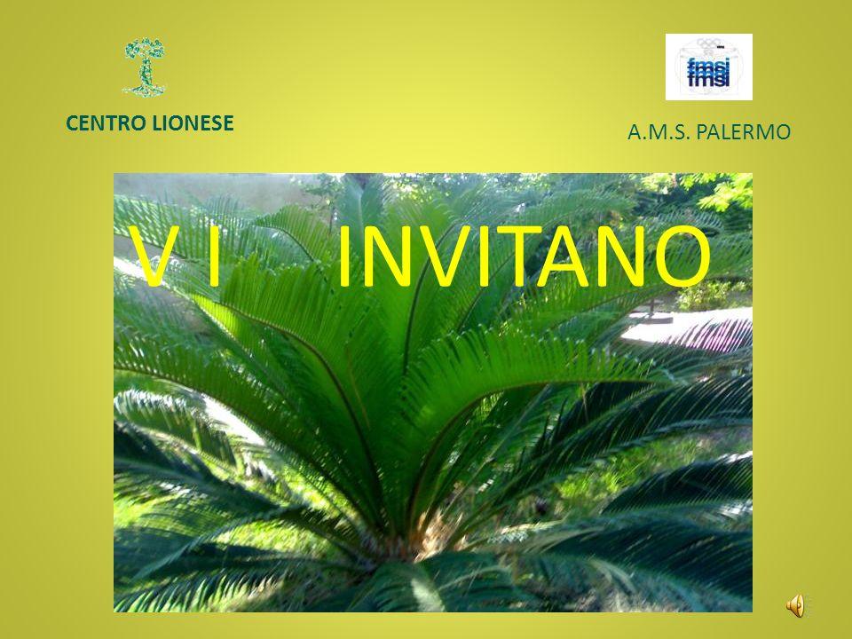 CENTRO LIONESE A.M.S. PALERMO V I INVITANO