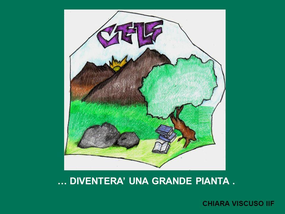… DIVENTERA UNA GRANDE PIANTA. CHIARA VISCUSO IIF