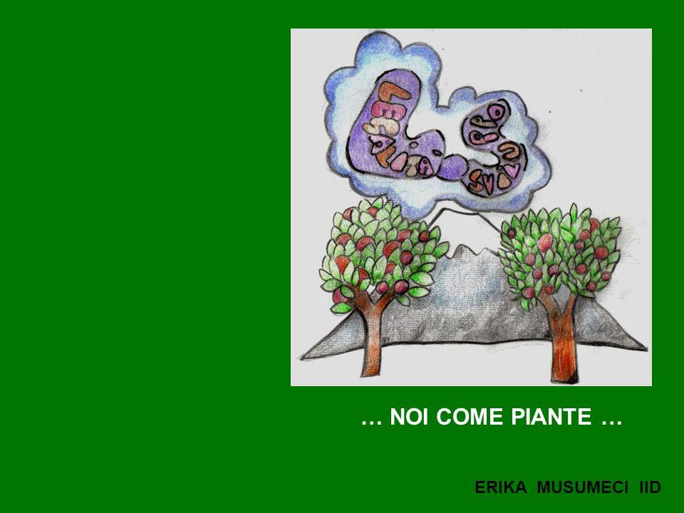 … NOI COME PIANTE … ERIKA MUSUMECI IID