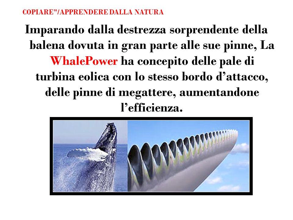Imparando dalla destrezza sorprendente della balena dovuta in gran parte alle sue pinne, La WhalePower ha concepito delle pale di turbina eolica con l